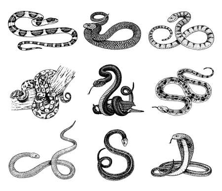 Set of snake illustration.