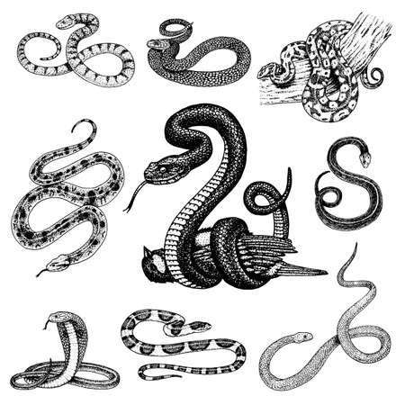 Set of snake illustration.