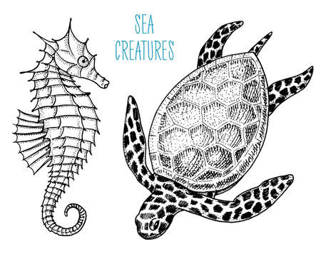 sea creature cheloniidae or green turtle and seahorse. engraved hand drawn in old sketch, vintage style. nautical or marine, monster or food. animals in the ocean Иллюстрация