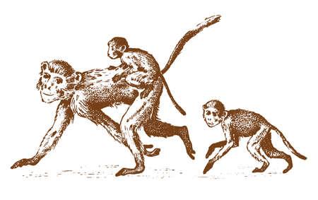 Monkeys or humanoid wild animals family in nature.