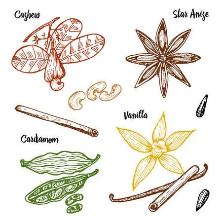 허브, 조미료 및 향료. 바닐라와 계피, 캐슈와 카 다몬, 종자 및 스타 아니스를 메뉴로 제공합니다. 유기 식물 또는 채식주의 야채. 오래 된 스케치, 빈 일러스트