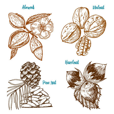Herbs, condiments and spices. almond and walnut, pine nut and hazelnut, seeds for the menu. Organic plants or vegetarian vegetables. engraved hand drawn in old sketch, vintage style.