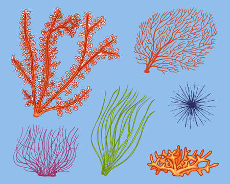 Marine plants seaweed. vegetable life and food for fish. engraved hand drawn in old sketch, vintage style. nautical or sea greens, monster or fish. animals in the ocean.