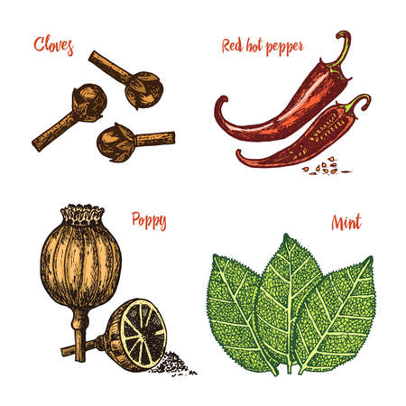 Herbs, condiments and spices. Red pepper, poppy and mint and cloves for the menu. Organic plants or vegetarian vegetables for cooking. engraved hand drawn in old sketch, vintage style. Illustration