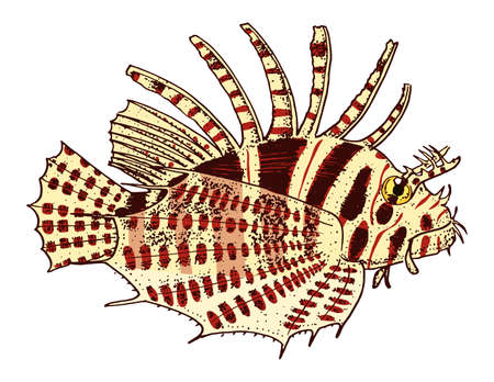 sea creature red lionfish. engraved hand drawn in old sketch, vintage style. nautical or marine, monster or fish. animals in the ocean.