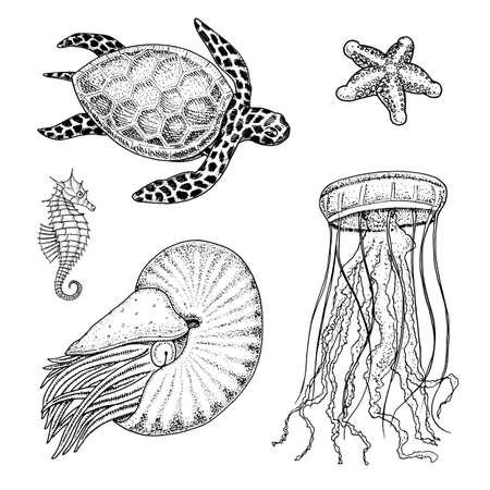바다 생물 cheloniidae 또는 녹색 거북 및 해마. 노틸러스 pompilius, 해파리와 불가사리 또는 연체 동물.