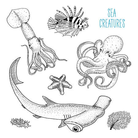 Fishes or sea creature octopus and squid, calamari. red lionfish and great hammerhead shark.