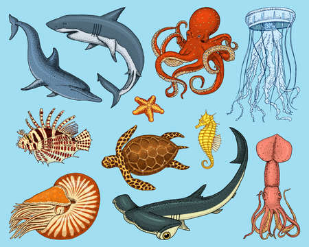 Zestaw ryb lub stworzenie morskie nautilus pompilius, meduza i rozgwiazda. ośmiornica i kalmary, kalmary. delfin i rekin młot. Ilustracje wektorowe
