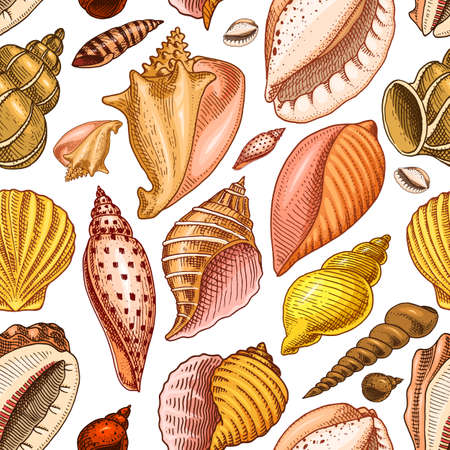 Seamless pattern shells or Mollusca different forms. sea creature. engraved hand drawn in old sketch, vintage style. nautical or marine, monster or food. animals in the ocean. Illustration