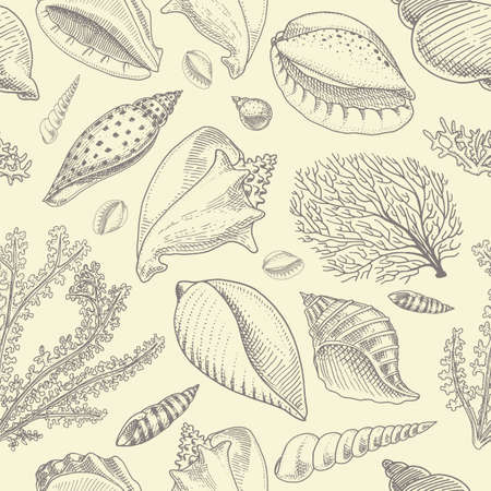 pattern shells, seaweed and mollusk different forms. sea creature. engraved hand drawn in old sketch, vintage style. nautical or marine, monster or food. animals in the ocean