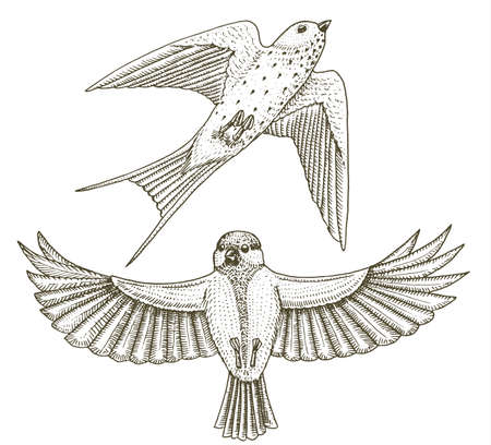 Small birds of barn swallow or martlet and parus or titmouse or great tit in Europe. Exotic tropical animal icons. Golden tailed sapphire. Use for wedding, party 일러스트