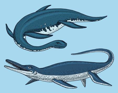 Dinosaurs Elasmosaurus, Mosasaurus, skeletons, fossils, winged lizard. American Prehistoric reptiles, Jurassic Animal engraved Hand drawn vector. Stock Illustratie