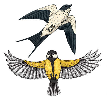 Small birds of barn swallow or martlet and parus or titmouse or great tit in Europe. Exotic tropical animal icons. Golden tailed sapphire. Use for wedding, party Illustration