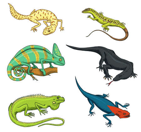 Chameleon Lizard, green iguana, Komodo dragon monitor, American Sand, exotic reptiles, spotted fat-tailed gecko. wild animals lacertian in nature. vector illustration.