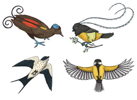 Exotic tropical animals in old sketch