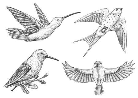 Small birds of paradise, barn swallow or martlet and parus or titmouse or great tit in Europe. Exotic tropical animal icons. Illustration