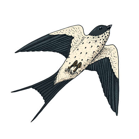Small birds of barn swallow or martlet in Europe. Exotic tropical animal icons. Use for wedding, party. engraved hand drawn in old sketch.