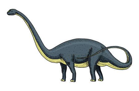 Dinosaur Brontosaurus or sauropod, Lambeosaurus, Diploids, Apatosaurus, skeletons, fossils, winged lizard. Stock Vector - 96471437