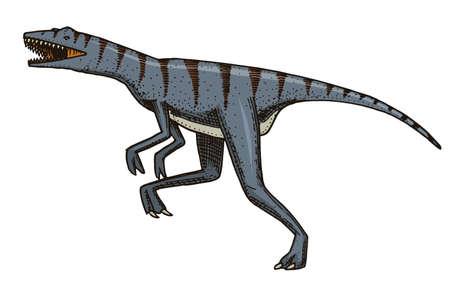 Dinosaur Velociraptor, skeletons, fossils. Prehistoric reptiles, Animal engraved Hand drawn vector
