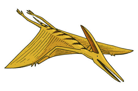 Dinosaur Pterosaur, skeletons, fossils, winged lizard. American Prehistoric reptiles, Jurassic Animal engraved Hand drawn vector