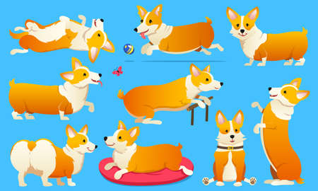 Set of cute dogs breed Welsh Corgi Pembroke on white background.