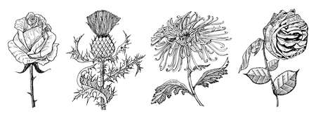 Wedding botanical flowers in the garden or spring plant. Aster, dahlia with leaves and buds, Burdock and herb medicinal. Vector illustration. engraved hand drawn in old vintage sketch for card. Vectores