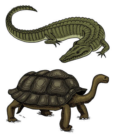 Crocodile and turtle. Reptiles and amphibians Pet and tropical animal. Engraved hand drawn in old vintage sketch. Vector illustration. Wildlife and Exotic Zoology