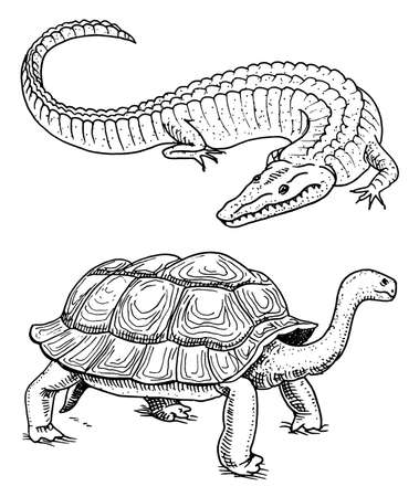 Crocodile and turtle. Reptiles and amphibians Pet and tropical animal. Engraved hand drawn in old vintage sketch. Vector illustration. Wildlife and Exotic Zoology.