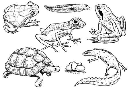 Reptiles and amphibians set. Pet and tropical animals. Wildlife and Frogs, lizard and turtle, chameleon and anuran Engraved hand drawn in old vintage sketch. Vector illustration. Exotic Zoology. Illustration