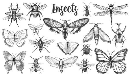 Different insects set. Butterfly and dragonfly, bug and pet bee. Mystical symbol of freedom. entomological collection. engraved hand drawn in old sketch vintage style. t-shirt or scrapbooking design
