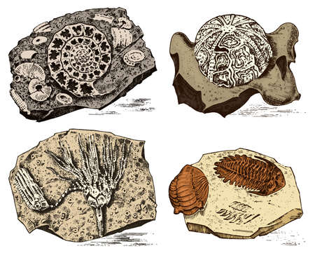 Fragment fossils, skeleton of prehistoric dead animals in stone. Ammonite and trilobite, Sea urchin and Crinoid. Archeology or paleontology. engraved hand drawn old vintage sketch. Vector illustration Illustration