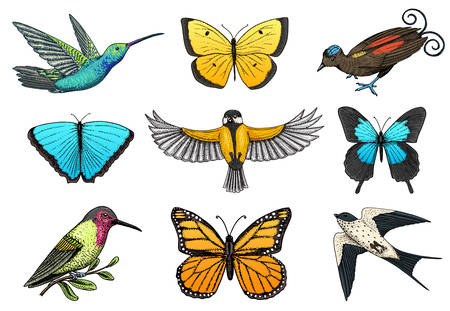 Collection of colorful butterfly insects and birds. Entomological symbol of freedom. Engraved hand drawn vintage sketch for wedding card or textiles. Vector illustration. Wild spring animals.