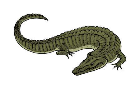 Green Crocodile, American Alligator Reptile amphibian. Tropical animal. Engraved hand drawn in old vintage sketch. Vector illustration.