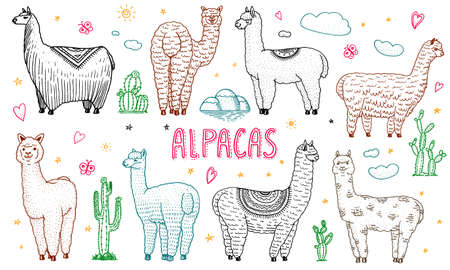 Set of cute Alpaca Llamas or wild guanaco on the background of Cactus and mountain. Funny smiling animals in Peru for cards, posters, invitations, t-shirts. Hand drawn Elements. Engraved sketch