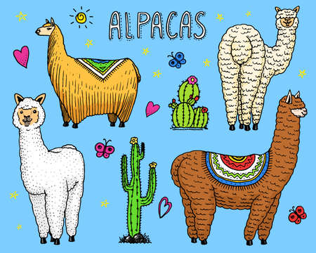 Set of cute Alpaca Llamas or wild guanaco on the background of Cactus. Funny smiling animals in Peru for cards, posters, invitations, t-shirts. Hand drawn Elements. Engraved sketch. Illustration