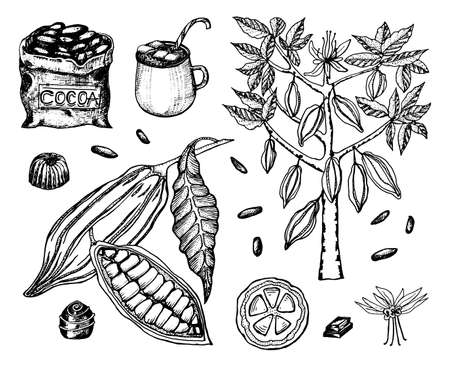 Cocoa beans and hot chocolate. Natural organic product. Seeds of fruit on the plantation. Ripe fruit, tree and an old bag with farm products. trendy cute vector illustration.