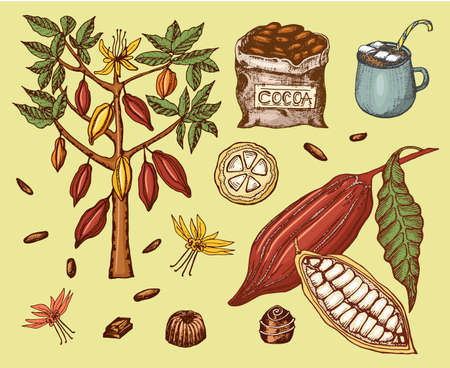 Cocoa beans and hot chocolate. Natural organic product. Seeds of fruit on the plantation. Tree and an old bag with farm products. trendy cute vector illustration.