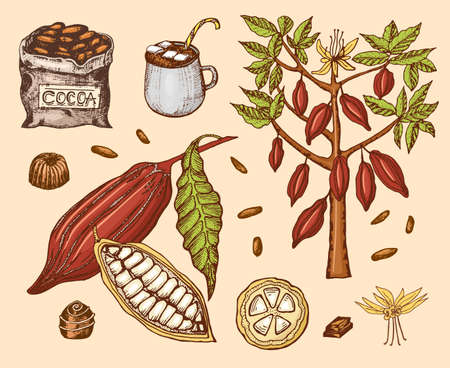 Cacaobonen en warme chocolademelk. Natuurlijk biologisch product. Zaden van fruit op de plantage. Boom en een oude tas met boerderijproducten. trendy schattige vectorillustratie.