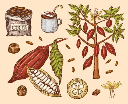 Kakaobohnen und heiße Schokolade. Natürliches Bio-Produkt. Fruchtsamen auf der Plantage. Baum und eine alte Tasche mit landwirtschaftlichen Produkten. trendige niedliche Vektorillustration.