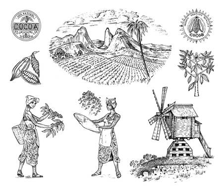 Cocoa or coffee plantation. Vintage farm and landscape with mountains, women harvest, windmill for label logo badge badges. Engraved hand drawn sketch. vector illustration.