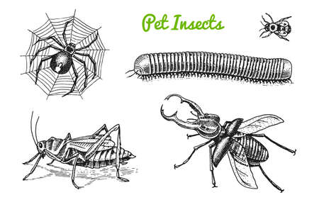 Große Menge Insekten. Bugs Beetles Tattoo, Spinne, Wurm Hundertfüßer Heuschrecken Biene. Lucanus cervus, Julida. Vintage Haustiere im Haus. Gravierte Vektorillustration. Vektorgrafik