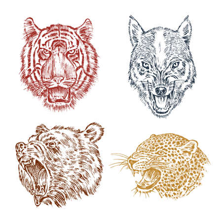 The face of brown grizzly bear, leopard and jaguar. Portrait of the wolf. Jaws of the tiger. Head of wild animal. Angry roar of a predator. Badge or emblem. Engraved hand drawn Vintage sketch.