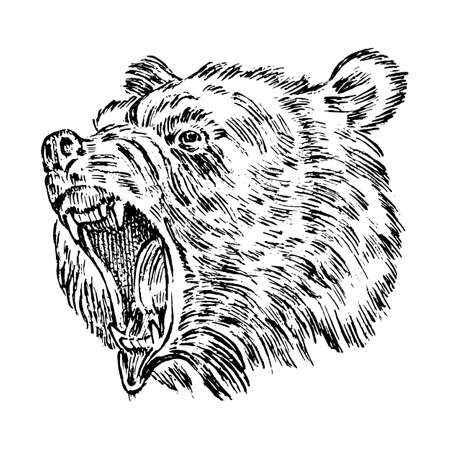Portrait of Grizzly Bear. head of a wild animal. angry roar of a predator. Badge or emblem Vector illustration. Engraved hand drawn old monochrome Vintage sketch