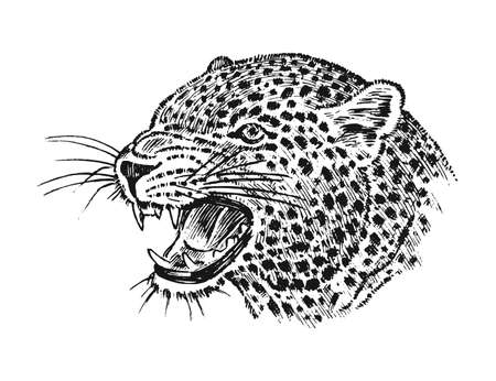 Japanese Wild leopard. Portrait Asian cat. profile of head or face. Tattoo artwork. Engraved hand drawn in old vintage sketch. Vector surreal illustration, badges, print for t-shirt.