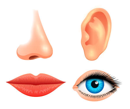 Human biology, sensory organs, anatomy illustration. face detailed kiss or lips, nose and ear, eye or view. set medical science or healthy man. vision, hearing, taste, smell, touch, look europeoid