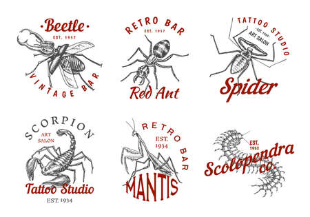 Set of insects logos. Vintage Pets labels for bar or tattoo studio. Bugs Beetles Scorpion Spider Ant Mantis Bee Scolopendra. emblems badges, t-shirt typography. Engraved Vector illustration.