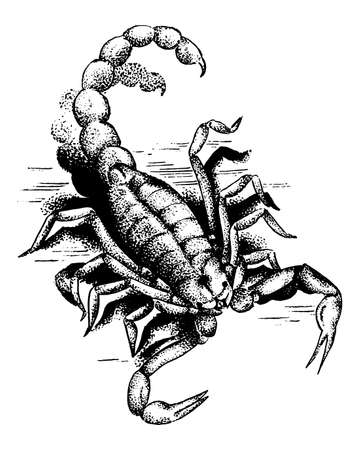 Graphic Scorpion. Aggressive astrological Insect symbol. Engraved hand drawn line art Vintage old monochrome sketch, ink. Vector illustration for label or tattoo. Vector Illustration