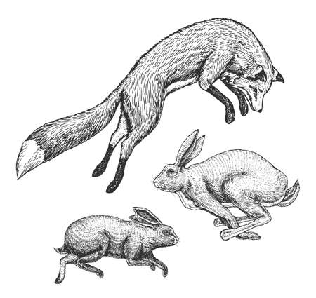 Wild forest animal jumping up. Soaring red fox and hare and rabbit. Food search concept. Vintage style. Engraved hand drawn sketch