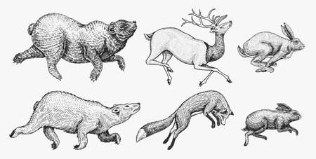 Soaring Hare Rabbit northern brown Bear Deer. Set of Wild forest animal jumping up. Vintage style. Engraved hand drawn sketch Illustration