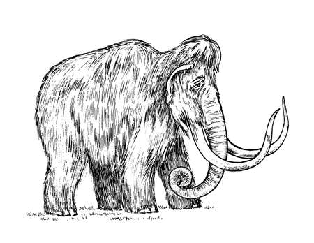 Big mammoth. Extinct animal. Ancestors of elephants. Vintage style. Engraved hand drawn sketch. Vector illustration